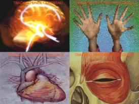 neuropsy1.jpg